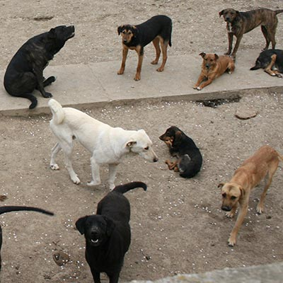 / BIS - A Visit to a 'Veterina Beograd' Dog Shelter